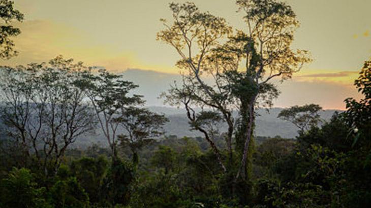 una_red_de_sensores_para_proteger_la_selva_misionera